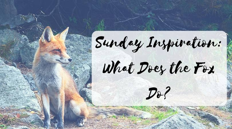 Sunday Inspiration- What Does the Fox Do
